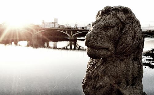 Week 36: A Lion Inside